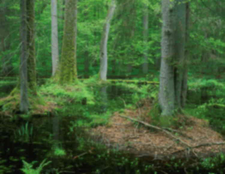 """Reactive Monitoring mission to """"Białowieża Forest"""" (Belarus/Poland)"""