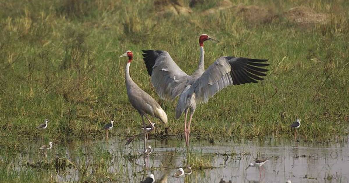 UNESCO World Heritage Centre - State of Conservation (SOC 2011) Keoladeo  National Park (India)