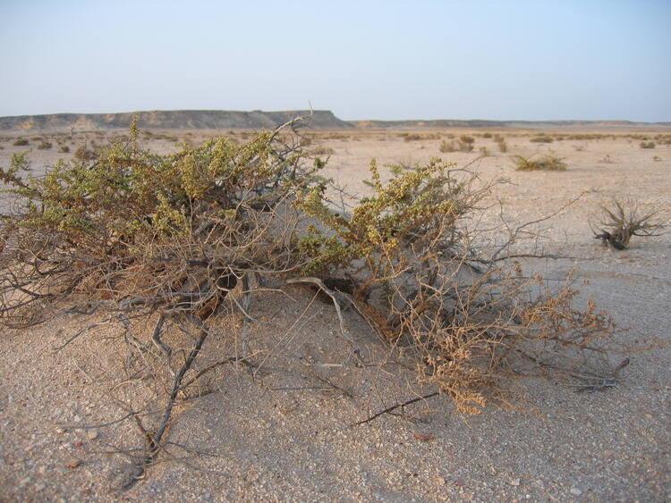 Arabian Oryx Sanctuary - UNESCO World Heritage Centre