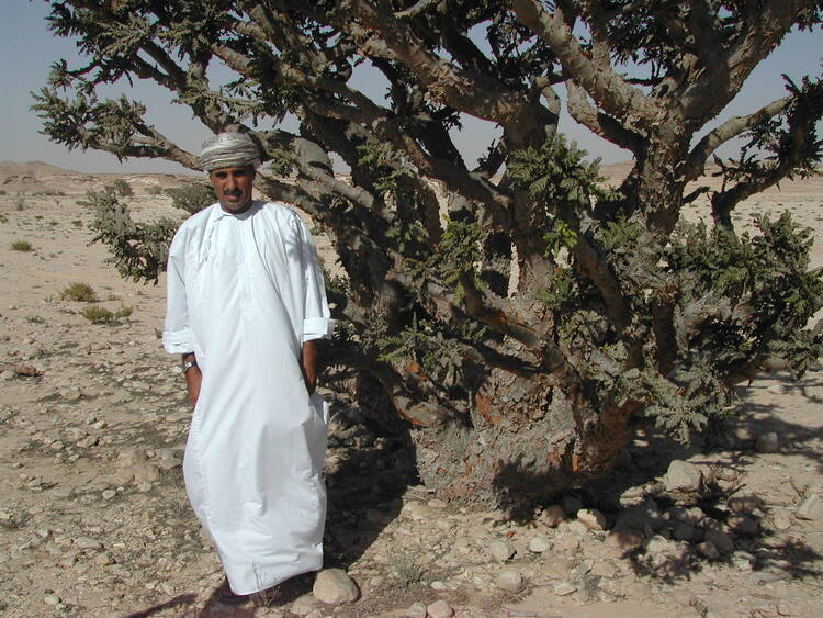 Land of Frankincense - UNESCO World Heritage Centre