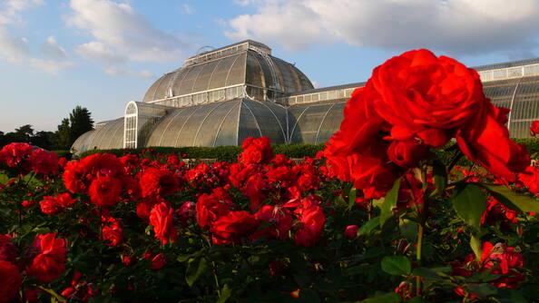 Лондонский ботанический сад в Кью.