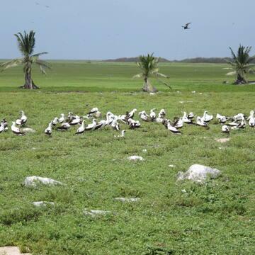 Phoenix Islands Protected Area - Gallery - UNESCO World ...
