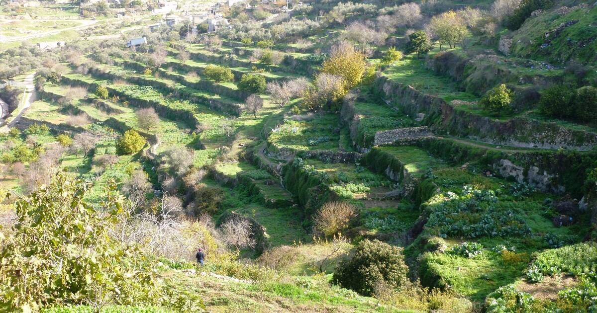 Palestine Land Of Olives And Vines Cultural Landscape Of