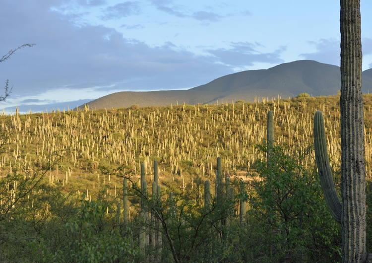 Tehuacán-Cuicatlán Valley  originary habitat of Mesoamerica - UNESCO ... e5a18da4f7508